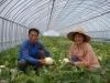 천안멜론 첫 수확, 한달 빨라
