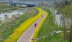 신방동 천안천변 꽃길 '산책 명소'로 급부상