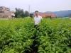영농조합법인 천안호두, 왜성호두 생산가능성 찾아 나서