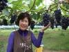 [코로나19 클린사업장 탐방] 천송이 포도나무 자랑하는 '장수포도농원'
