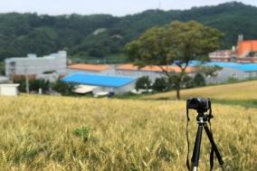 [포토] 싱그러운 밀 재배단지에서 쉼을 얻다